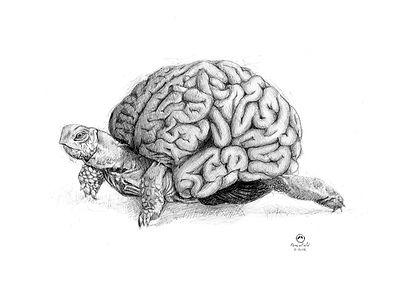 lamina cerebro lento tortuga.jpg