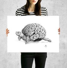 mostra lamina cerebro lento tortuga.jpg