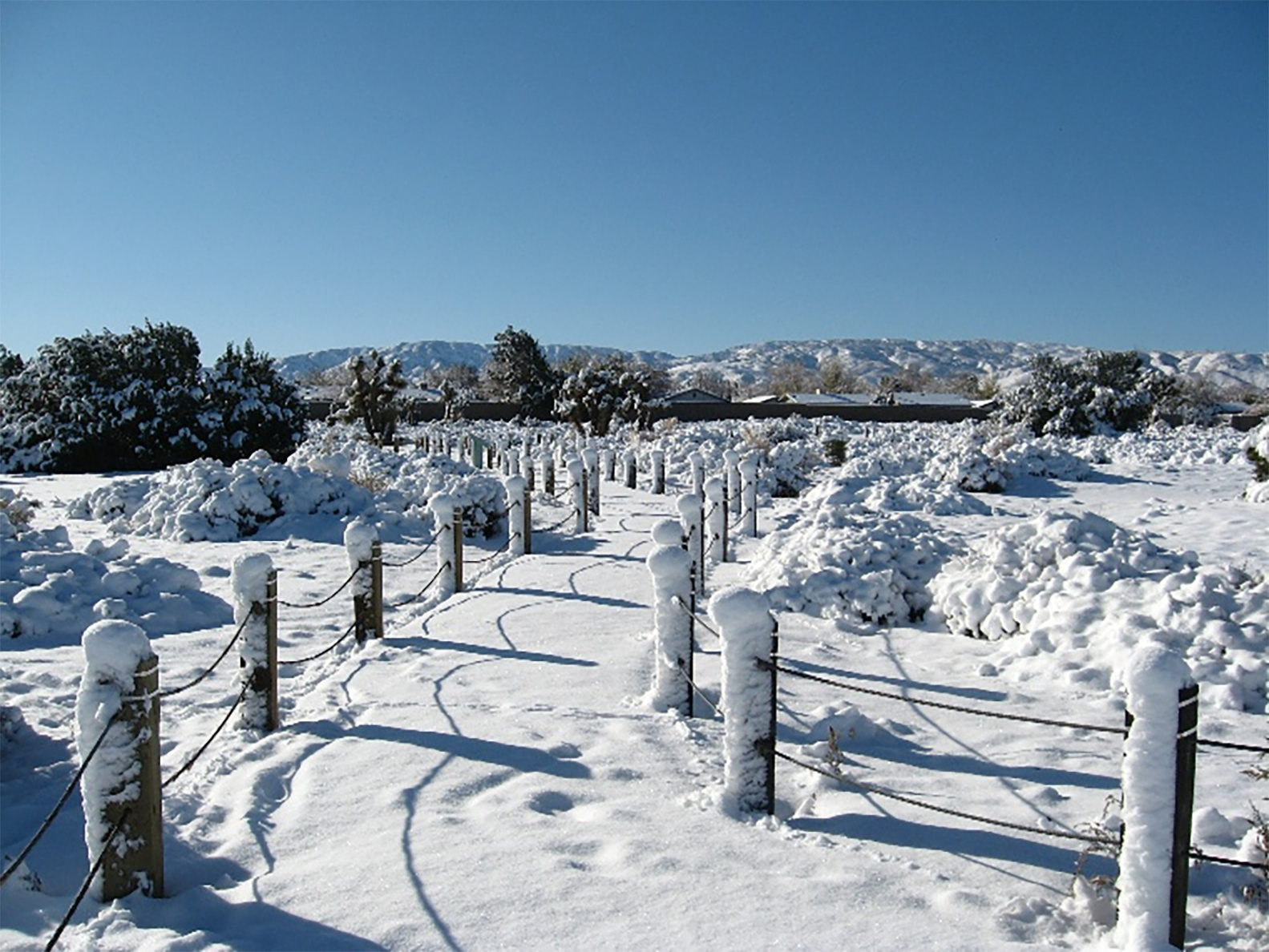 Prime Desert Woodland Trails
