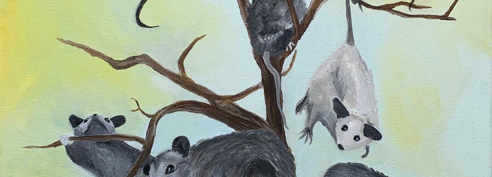 Opossum Tree