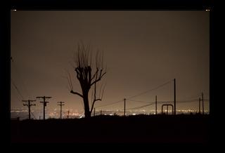 Winter_s Tree _edit.png