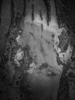 January Clothed in Ice #6