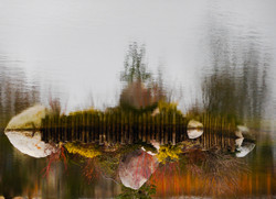 landscape (cover photo)