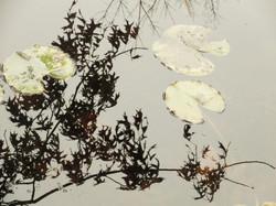 December Gardens 16 (cover photo)