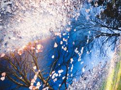 december gardens 8 (cover photo)