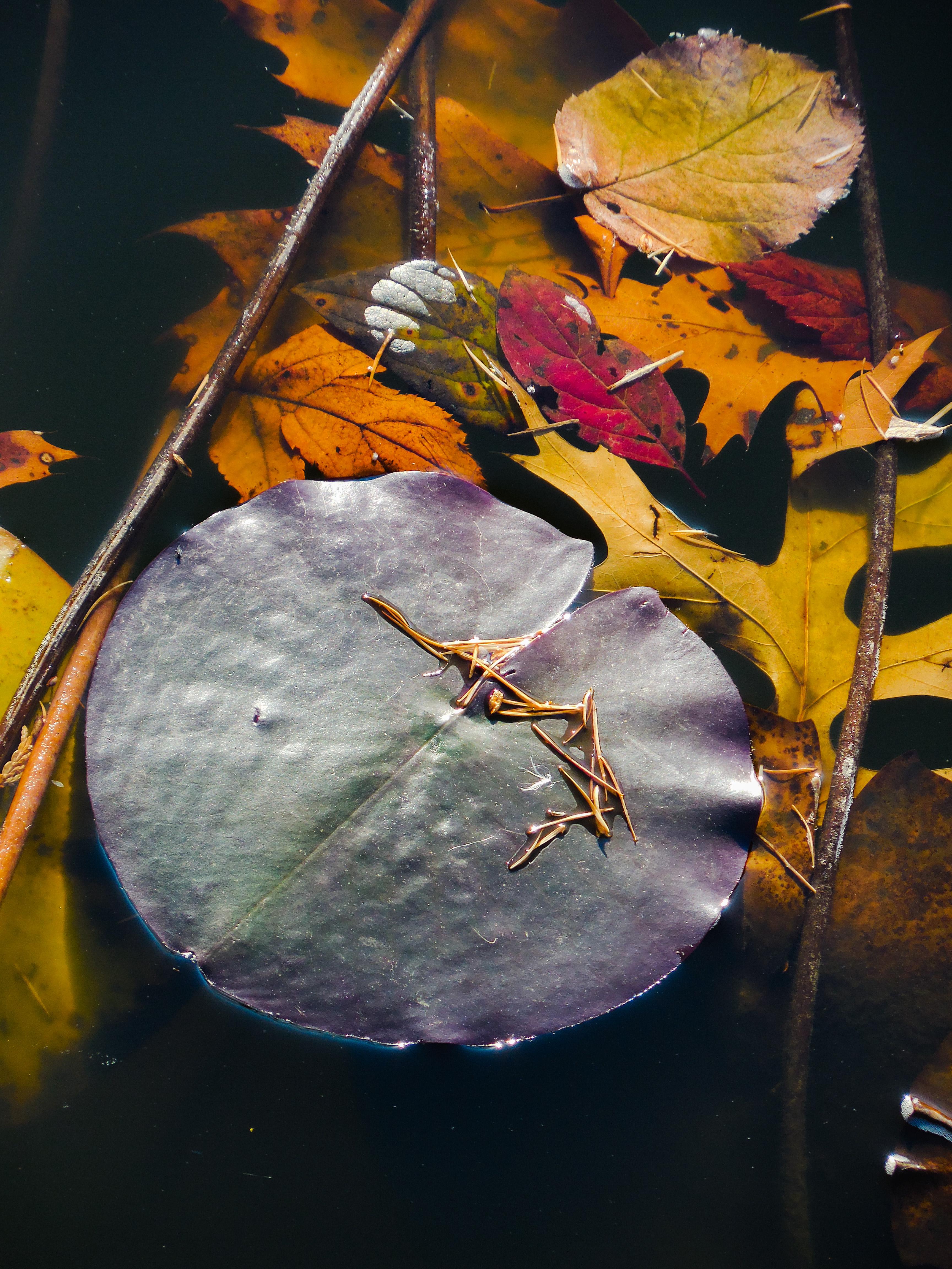 autumn says goodbye #5