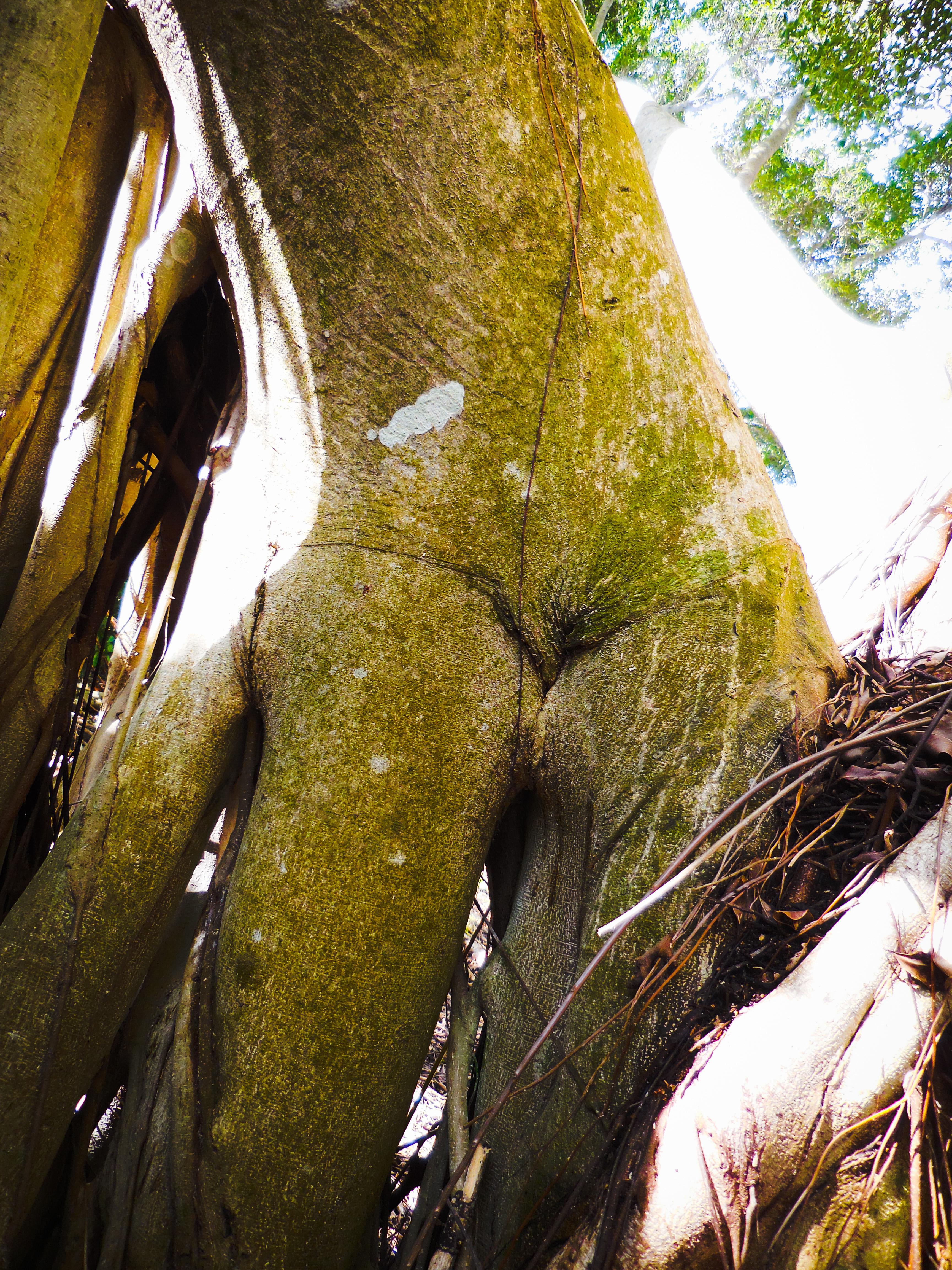 Banyon Erotica #5