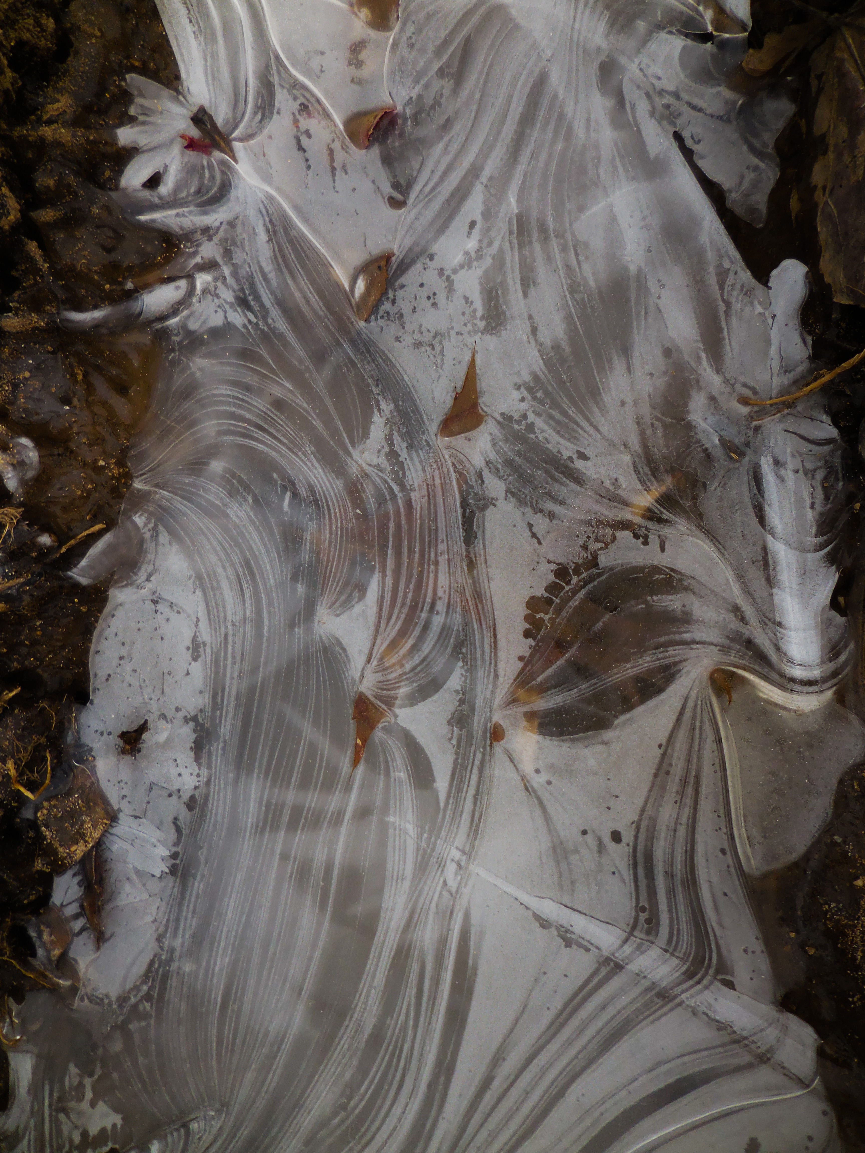 January Clothed in Ice #1