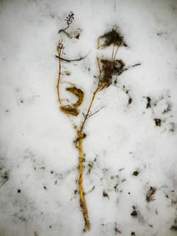 february garden #4