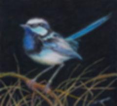bluewren.jpg