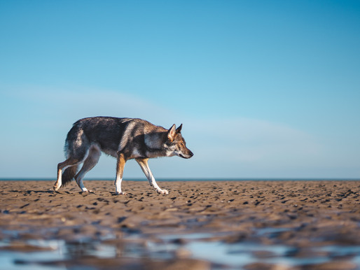From Lone Wolf to Wolf Pack: The Key to CEO Survival is Utilize Your Community