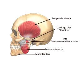 Temperomandibular Joint Pain Treatment NW Calgary Chiropractor Elaine Screaton