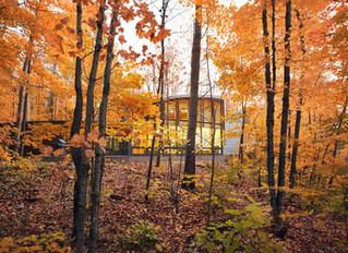 Northern Woods Retreat
