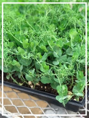 """Local Foodways 