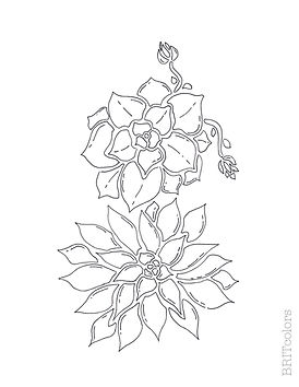 Two succulent coloring page
