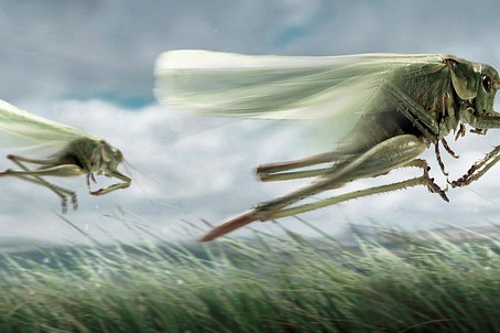 PROPHETIC WARNING: The locust IS the storm!