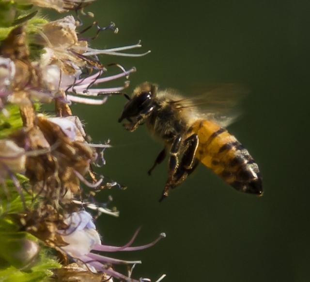 Collecting The Pollen - J Wilson