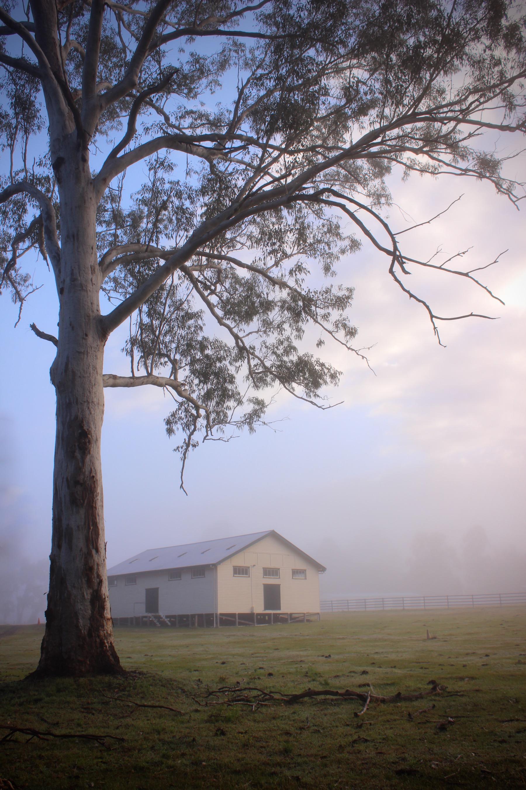 Bonalbo Misty Sunrise