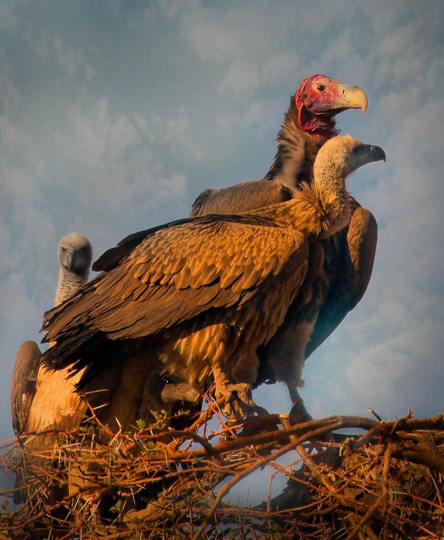 Mum, Dad & The 2 Chicks