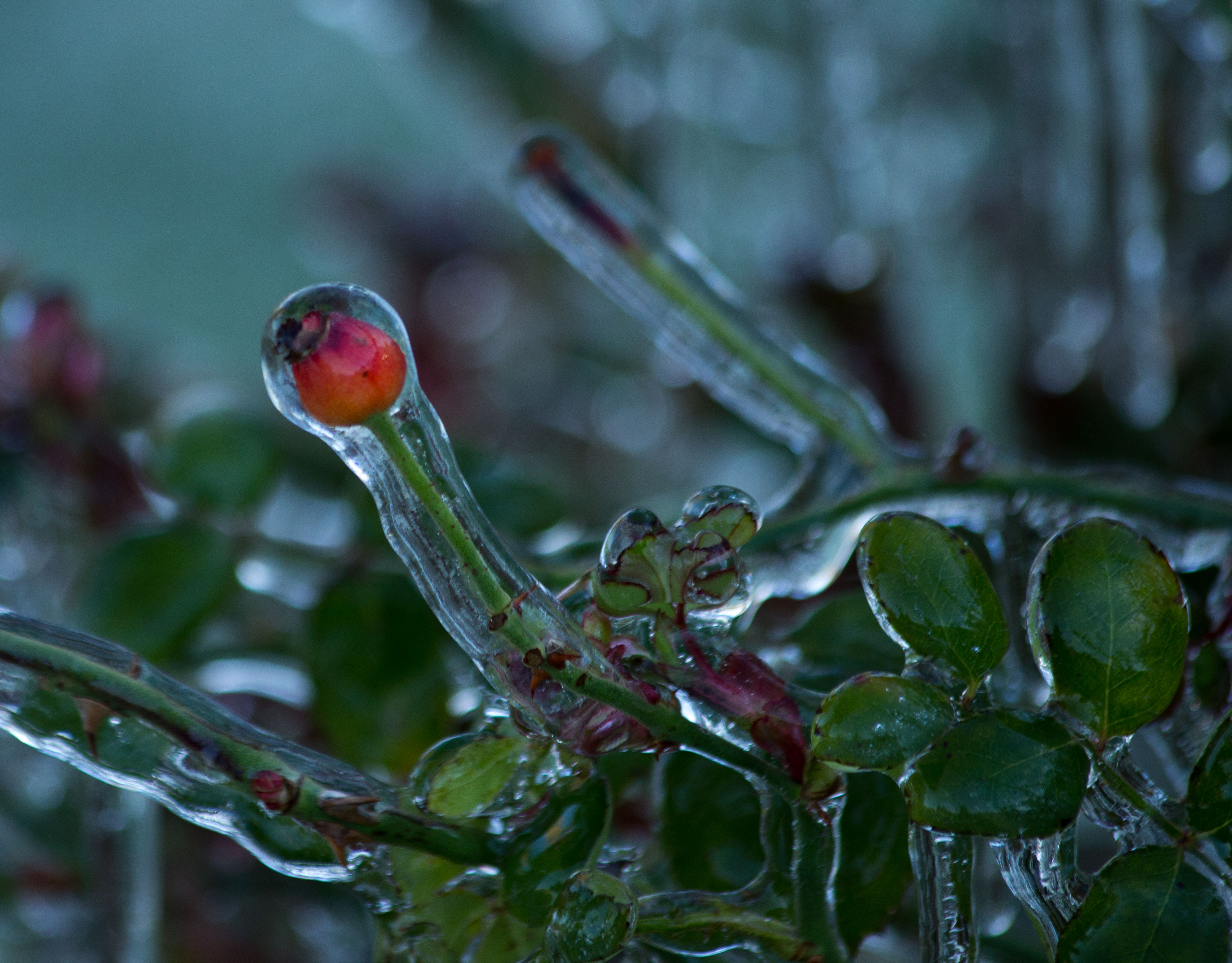 Cocoon of Ice