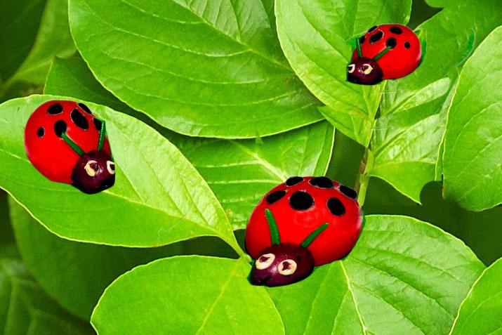 Ladybirds.Jan