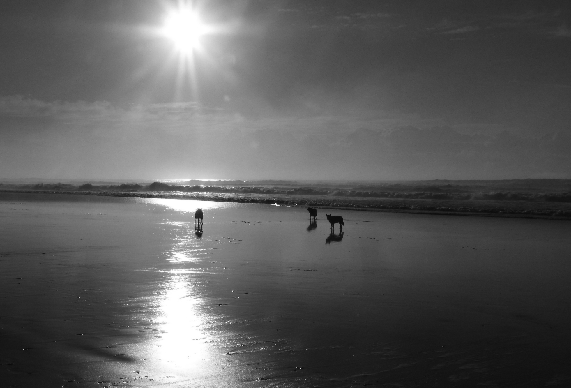 dogs on beach Debbie Handley