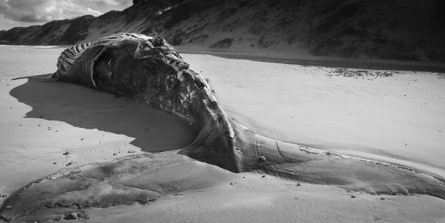 Beached Whale - J Wilson.jpg