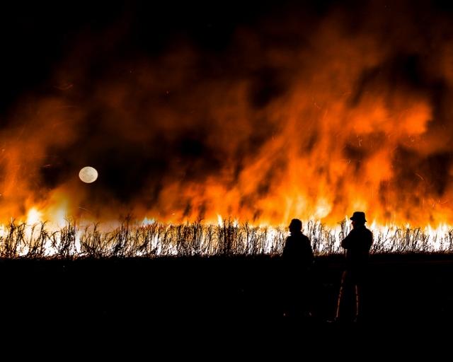 Watching a Cane Fire - J Wilson