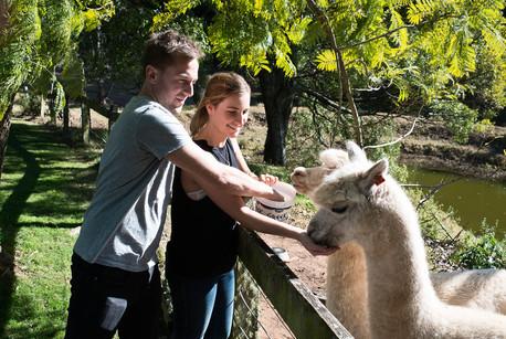 Alpaca Feeding.jpg