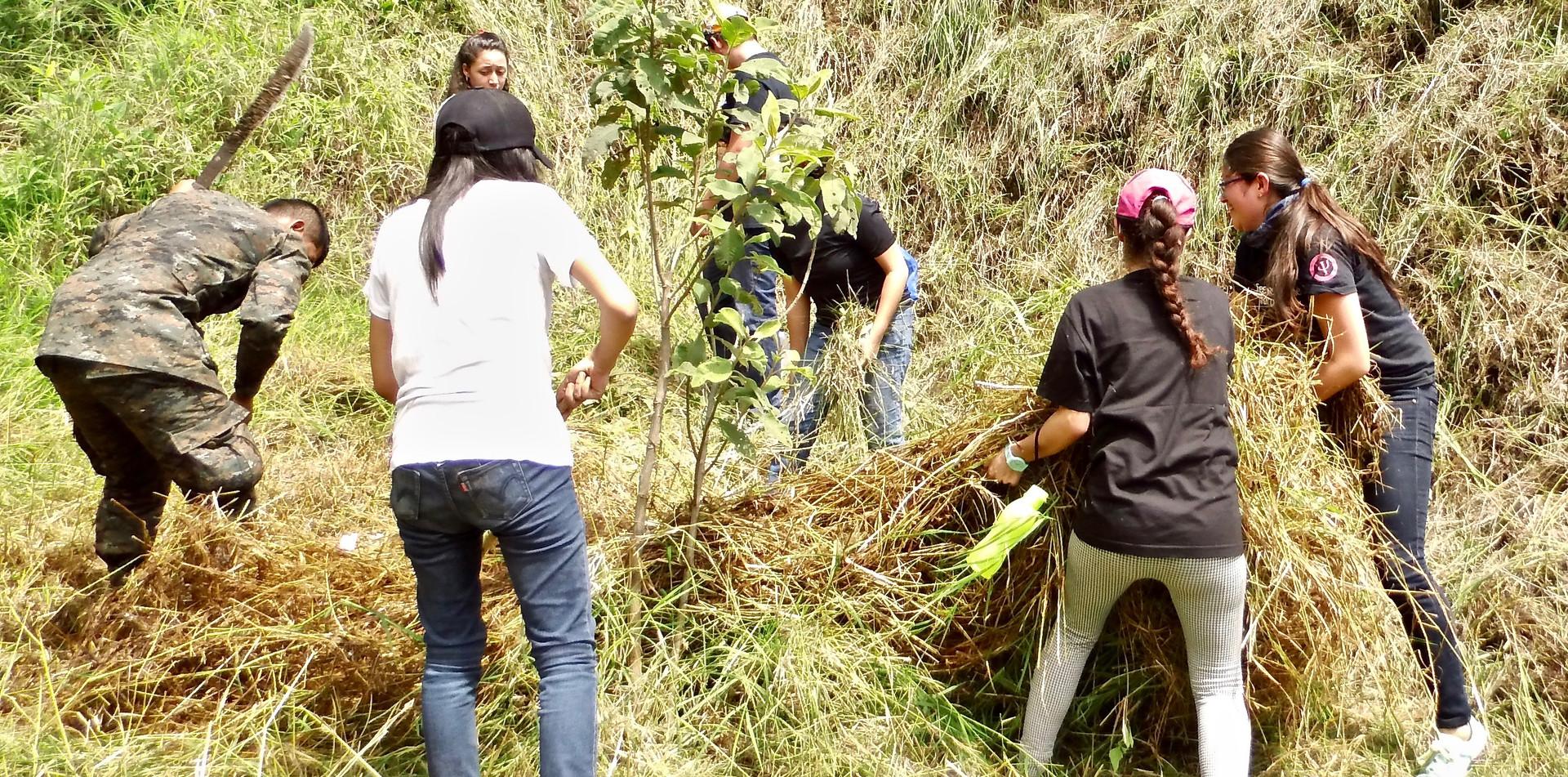 Actividad de Reforestación #1