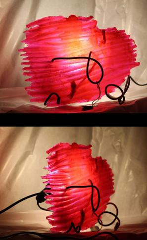 n2-zebril-rose-1.jpg