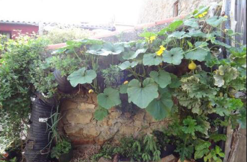jardin 2.png