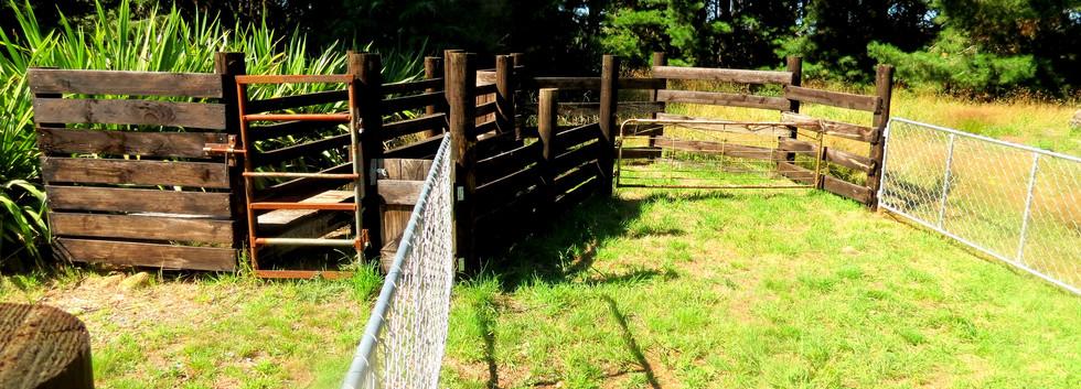 Yards finished_edited.jpg