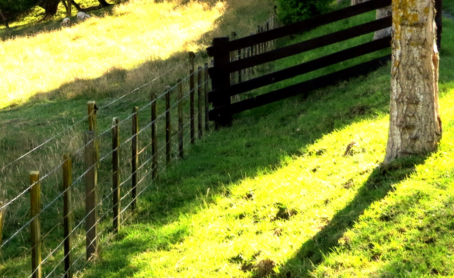 Drive fencing_edited.jpg