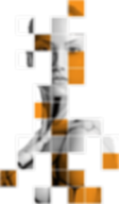 Holly-orange-flipped-564.png