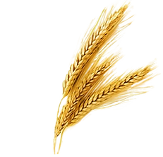wheat-transparent-file-4_9608.png