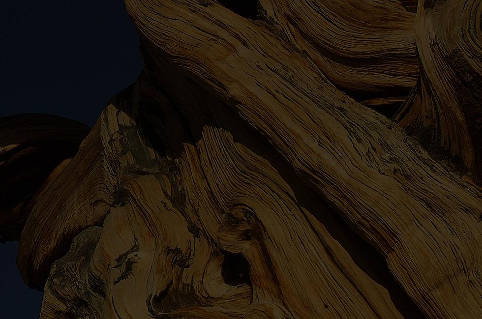 GrainBristleconeColor.jpg