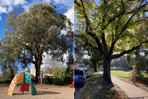 Online petition to save as many trees as possible in Mont Albert and Surrey Hills due to the LXRP