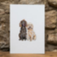 191124 The Cotswold Spaniel 1.jpg