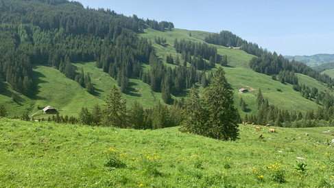 Two of the dairies on the slopes of the Alp