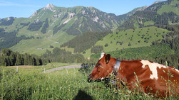 Kuh-und-Berge.jpeg