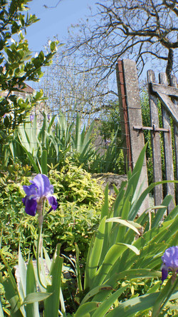Gate to meadow garden