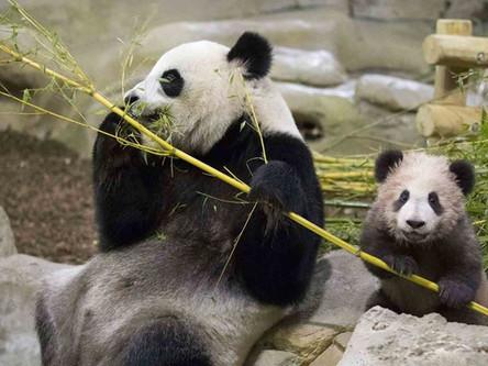 Zoo-Park de Beauval (50 mins)