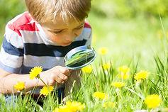 Dig-Plant-Grow-Pollinator-Pals.jpg