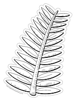 Palm Branch.png