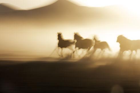 Blurry photo of wild horses running.jpg