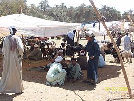 Animal market in upper Egypt