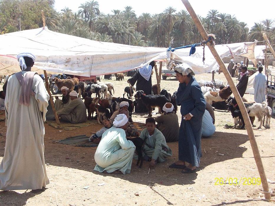 Farmers at Animal Market.jpg