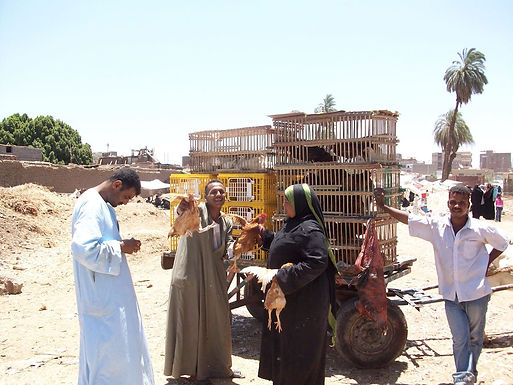 Moving chicken shop along the trail in Upper Egypt.