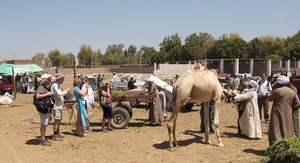 Daraw animal market